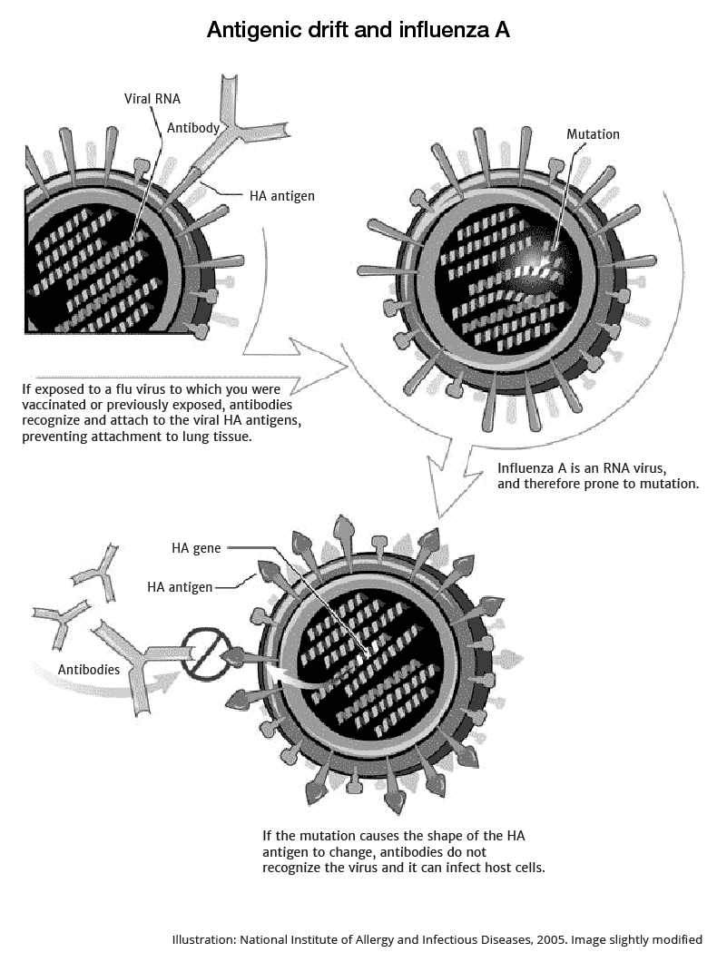 Antigenic driff and influenza A