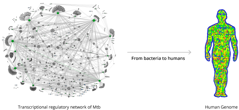 From bacteria to humans