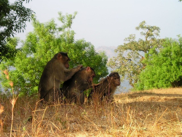 Cooperative phenomena in the animal kingdom